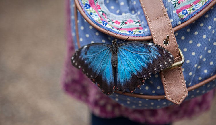 A butterfly rests on a visitor's bag