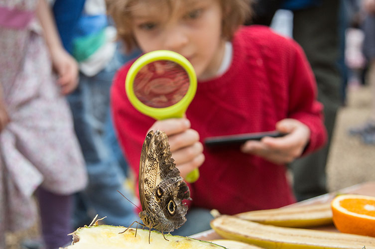 Child looking at a butterfly through a magnifying glass