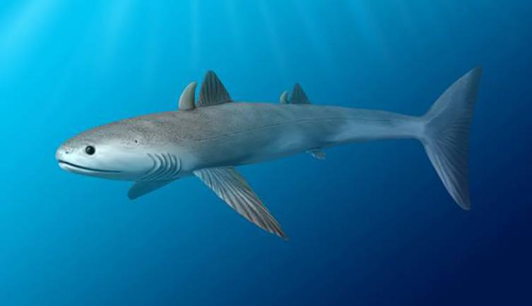 Le premier requin reconnaissable à évoluer est cladoselache