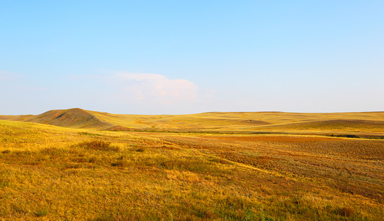 Open grasslands with a blue sky. Weighing up to 3.5 tonnes, Elasmotherium lived on the Eurasian grasslands ranging from southwestern Russia and Ukraine to Kazakhstan and Siberia.