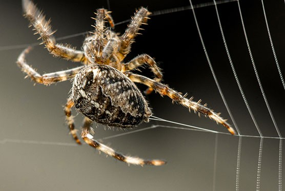 how do spiders make their webs?