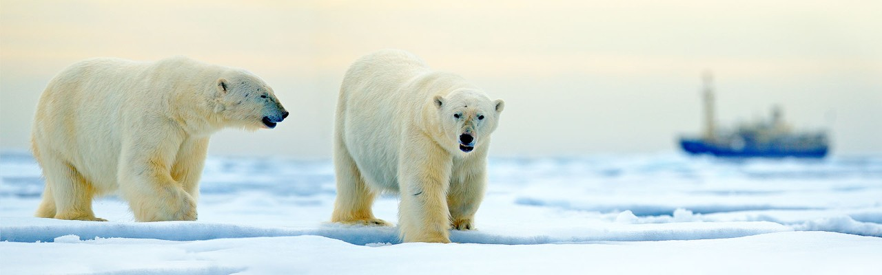 Science Among Polar Bears A Day In The Life Of An Arctic Researcher Natural History Museum