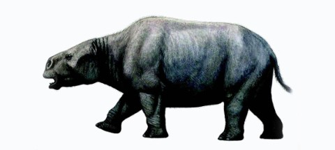 An artist's impression of how Toxodon might have looked. Image by Mauricio Antón.