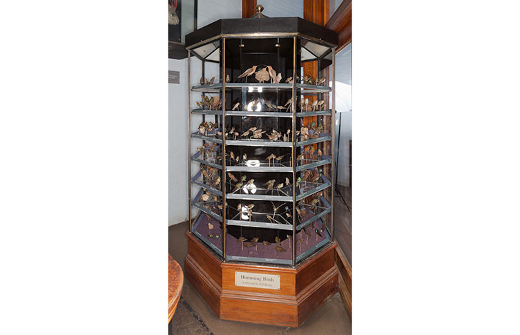 The hummingbird display case before restoration