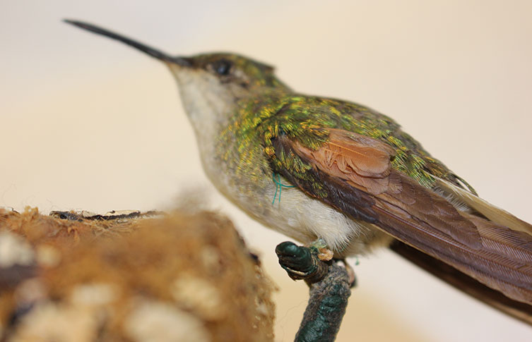 A hummingbird and verdigris
