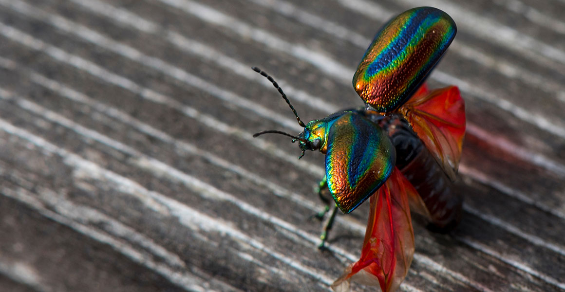 Uk Beetles 17 Of The Most Spectacular And Beautiful Natural