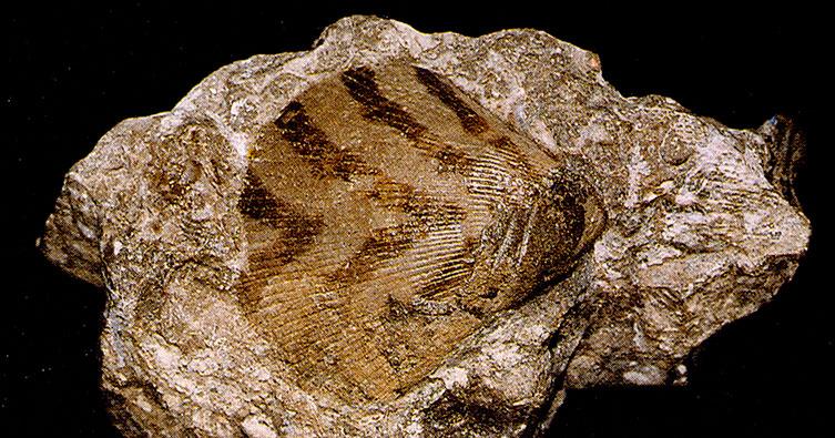 fantastic fossils natural history museum