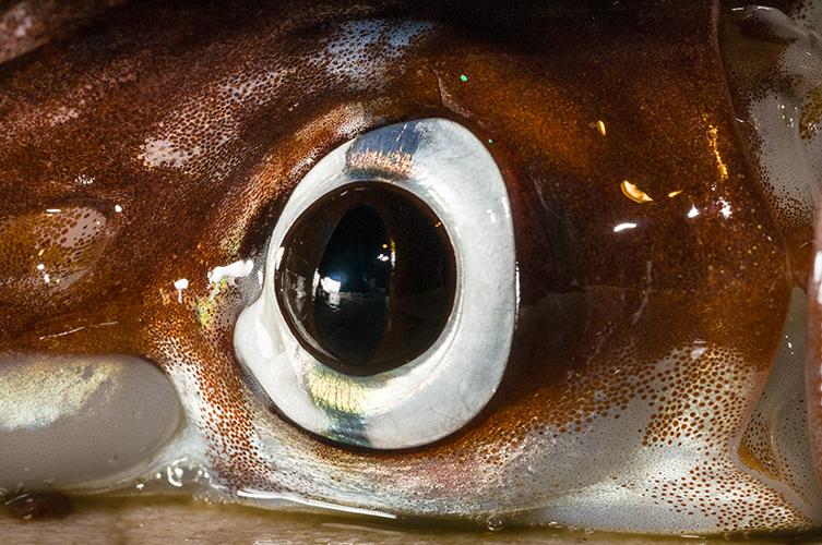 Amazing eyes: 17 vision champions | Natural History Museum