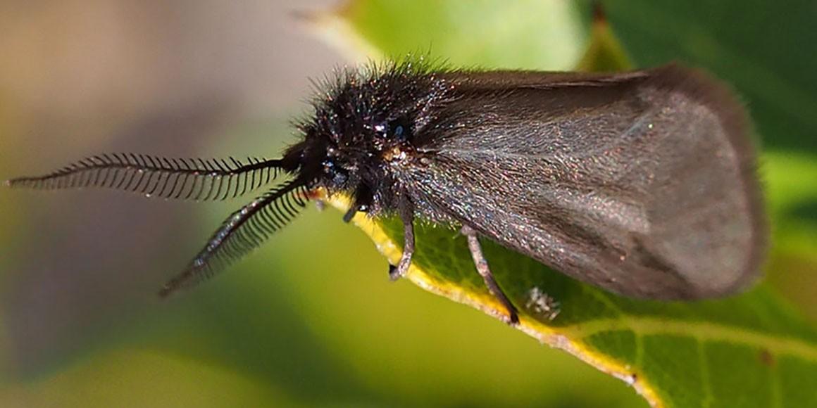Do Moths eat Leaves?