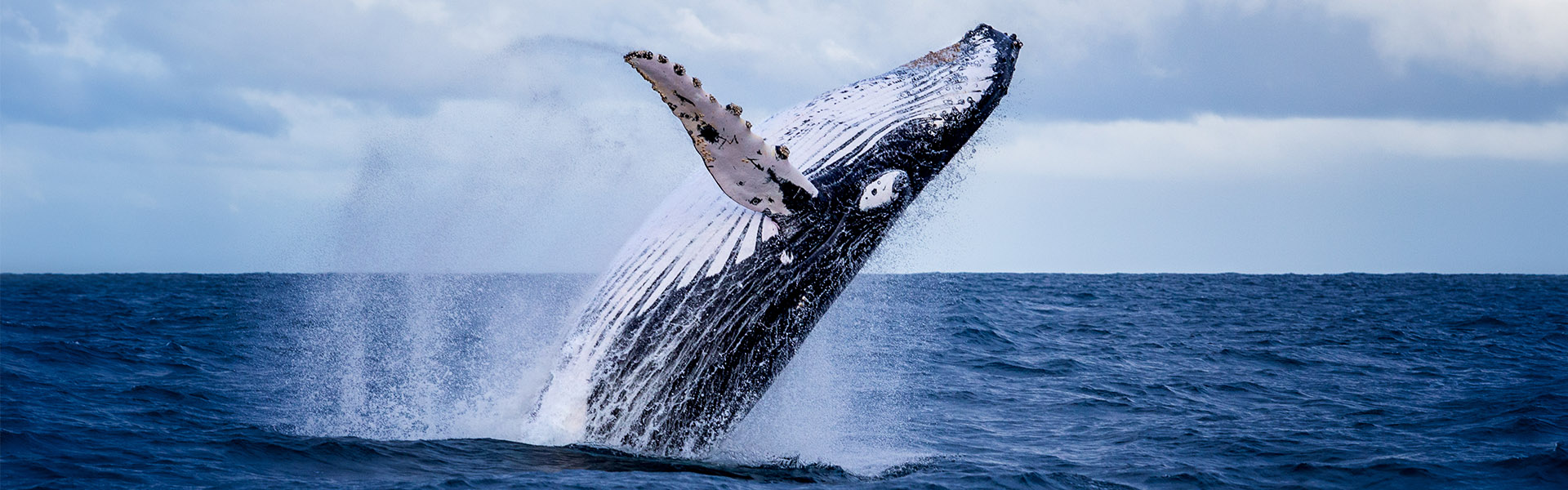 stock-humpback-whale-hero-desktop