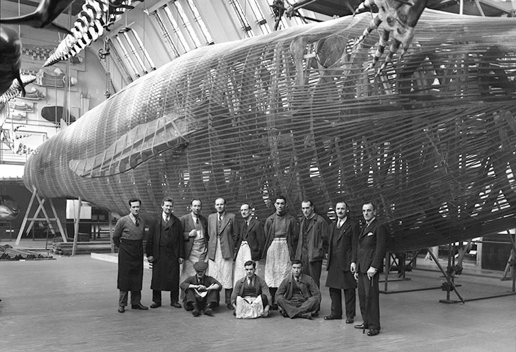 Staff stand in front of a blue whale model.