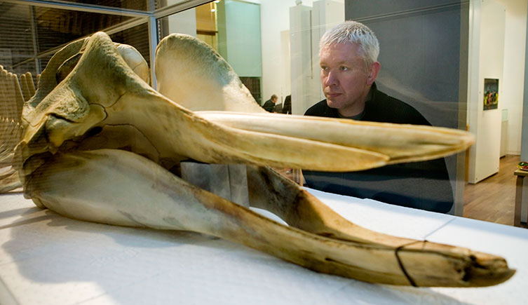 richard-sabin-and-thames-whale-skull-two-column