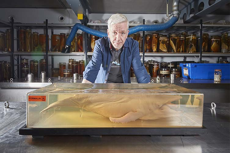 Richard Sabin with a humpback foetus in the Museum's collections.