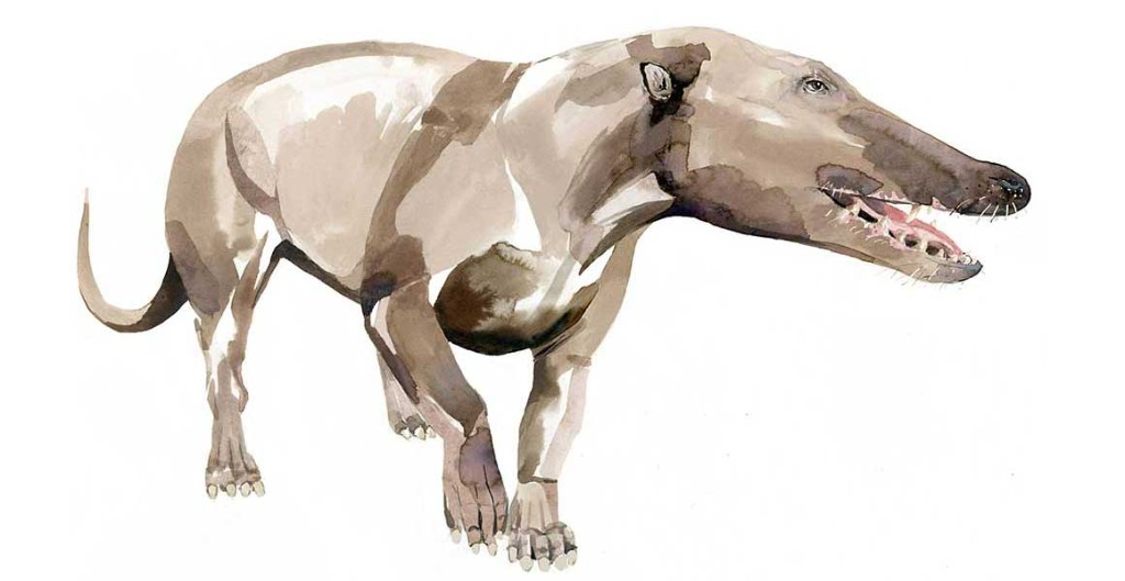 An artist's impression of what Pakicetus, an early ancestor of the whale, might have looked like
