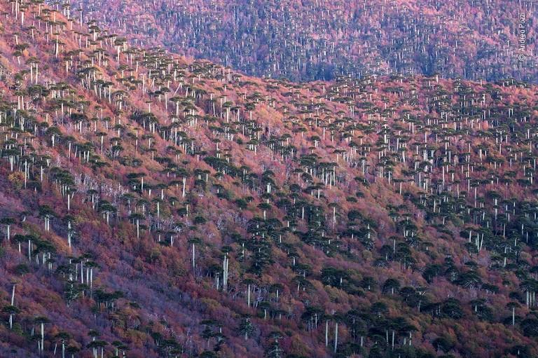 A landscape of autumn coloured trees