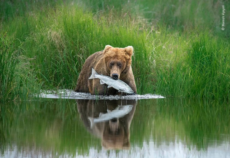 A brown bear stands in water with a salmon in its mouth