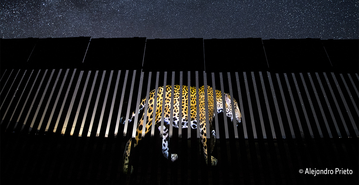 Wildlife Photographer of the Year: the border wall blocking biodiversity