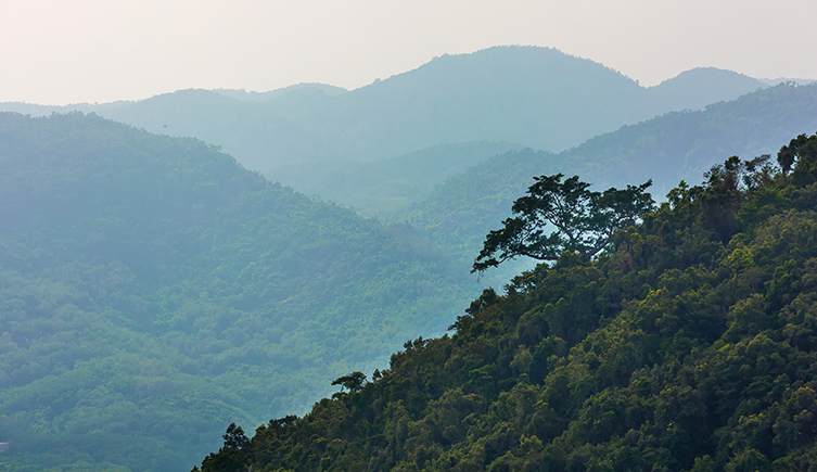Hills covered in rainforests