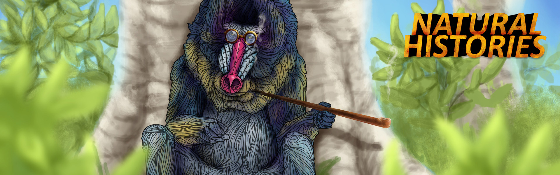 Mandrill illustration for BBC Radio 4 Natural Histories series