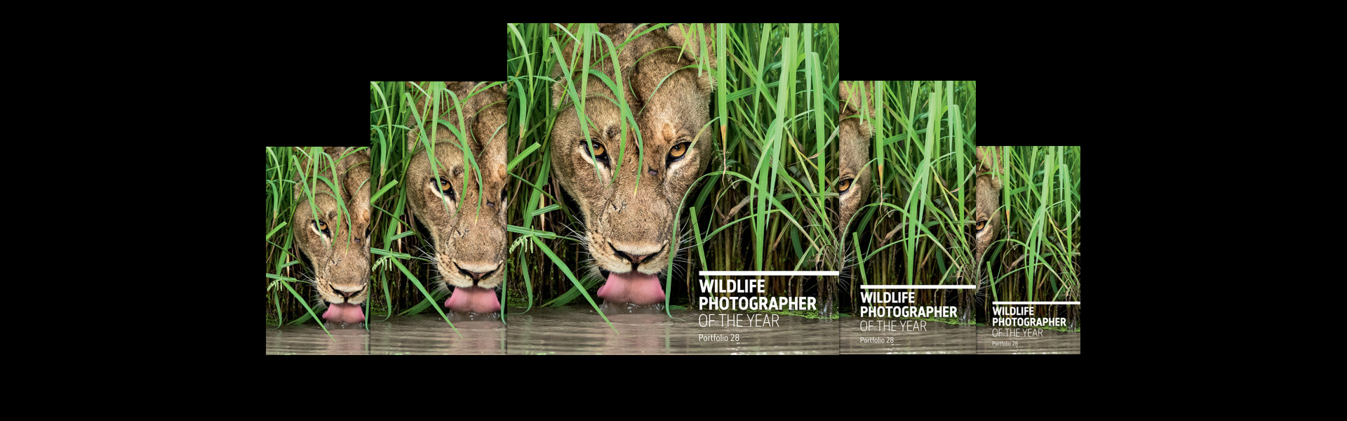 Win a Wildlife Photographer of the Year portfolio
