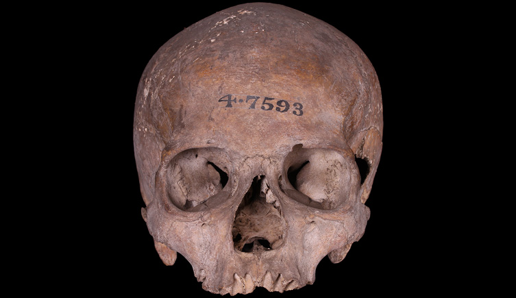 Cranium of adult female found under the Bank of England