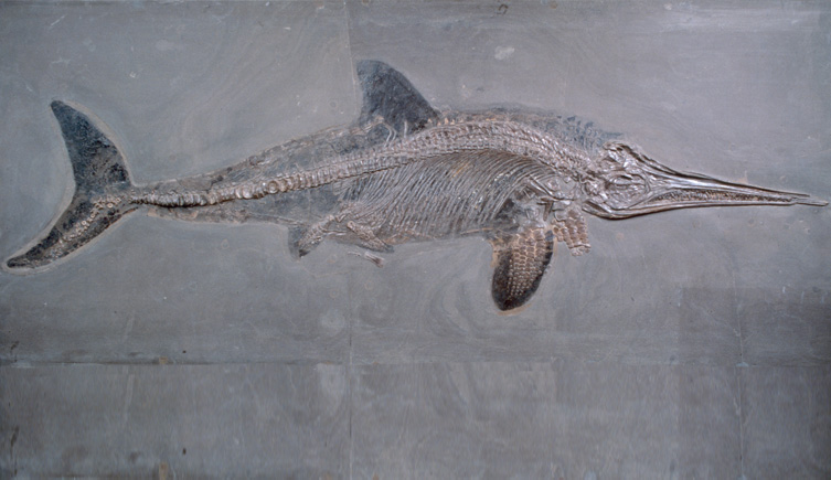 ichthyosaur fossil - photo #33