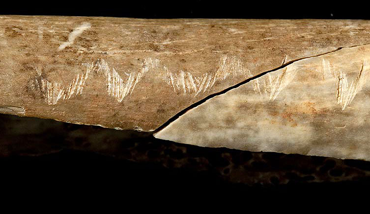Carved bone reveal rituals of prehistoric cannibals