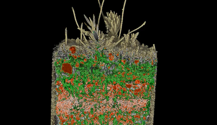 <p>Co-evolution of plants and soils</p>