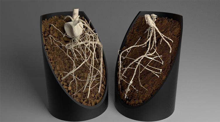 Plant Root Systems in Soil 3 © Stefan Mairhofer