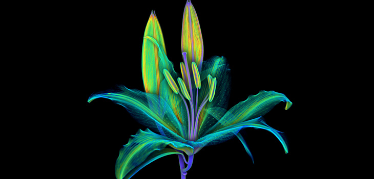 Tomography scan of a lily