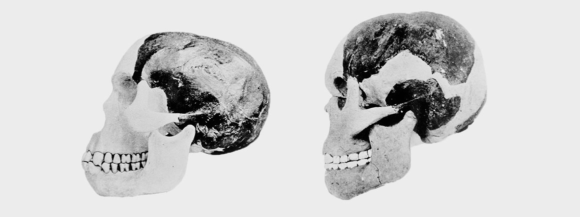 Photograph of Piltdown man's cranium and mandible