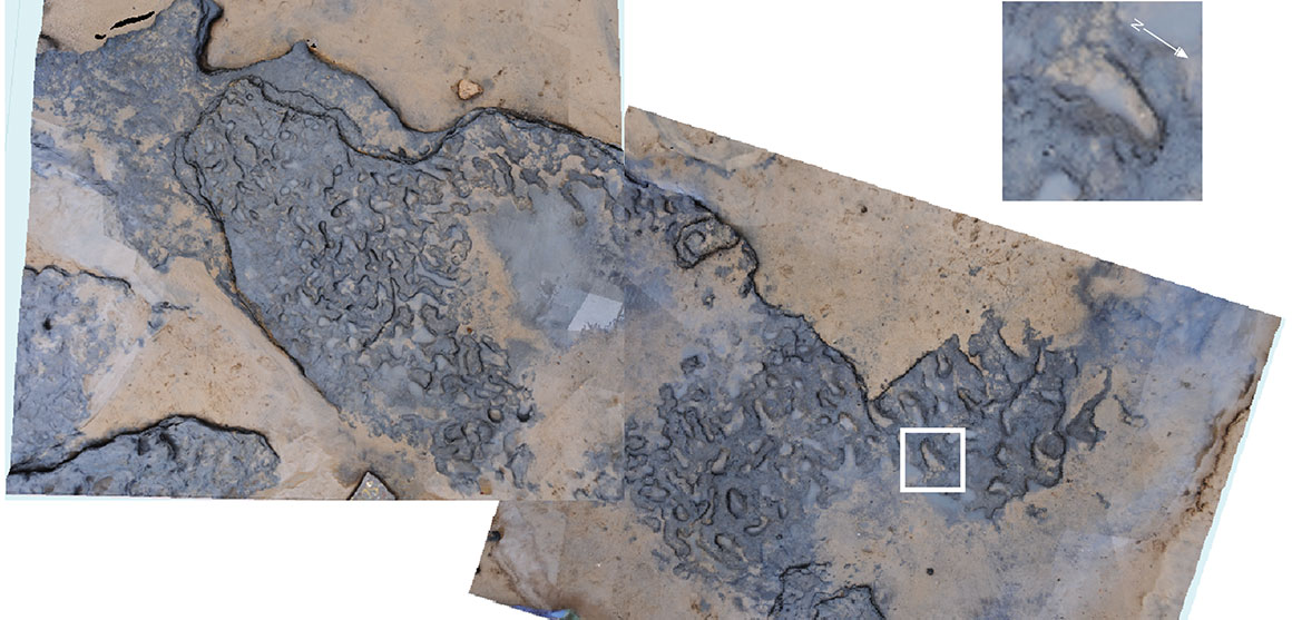An area of the footprints, with an enlarged photo of footprint 8 showing toe impressions