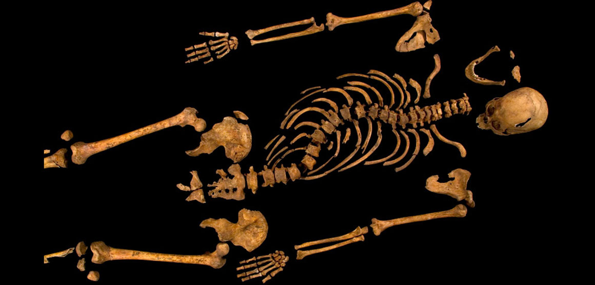 Richard III's skeleton