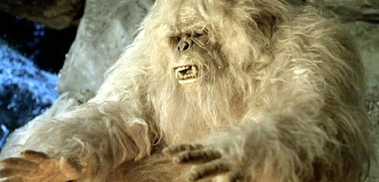 Image result for yeti images