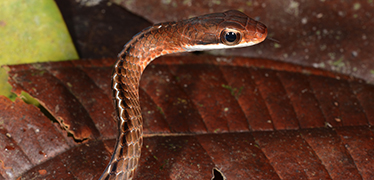 Study sheds light on snake vision