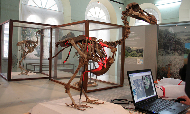 The dodo skeleton being scanned