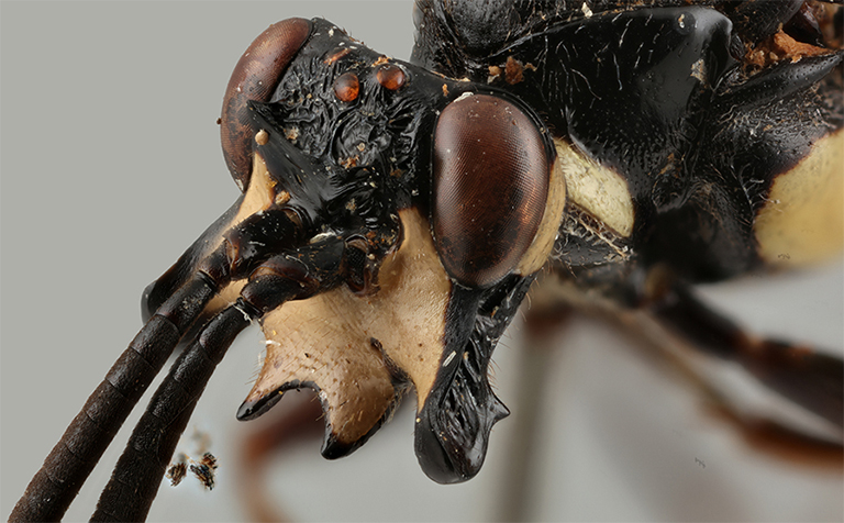 'Monstrous' wasps could reveal their species' secrets