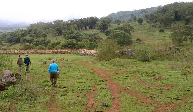 Cleared areas of the Harenna Forest in Ethiopia