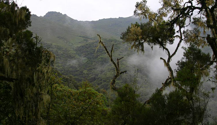 The Harenna Forest in Ethiopia