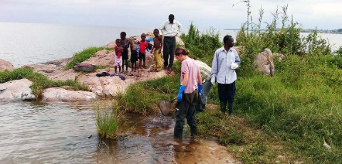 Researchers collecting snails along the banks of Lake Victoria