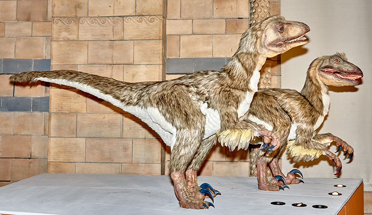 Deinonychus animatronics in the Museum Dinosaur gallery