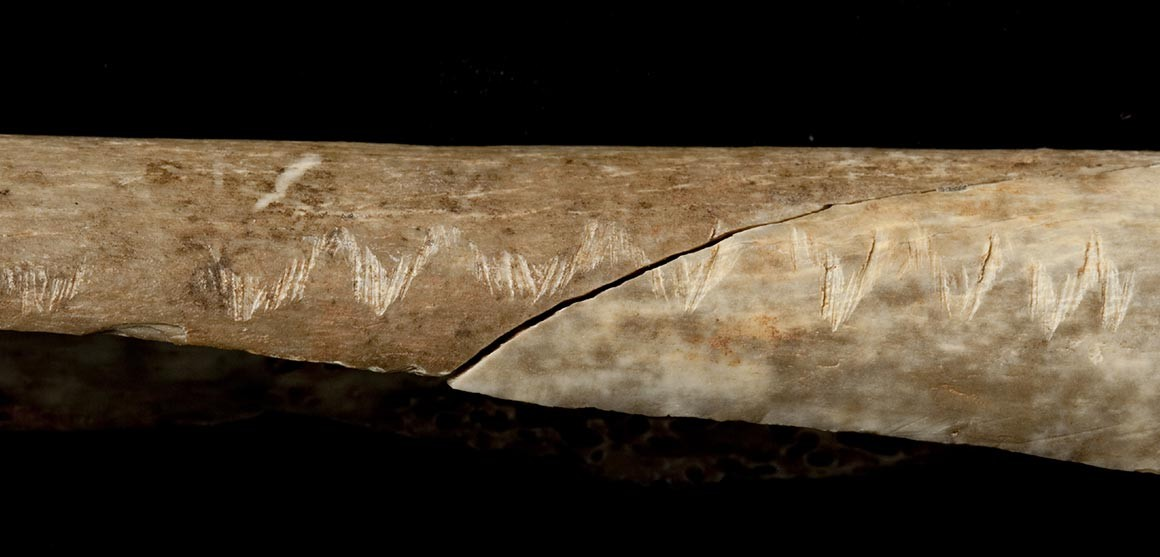 Carved Bone Reveals Rituals Of Prehistoric Cannibals Natural History Museum