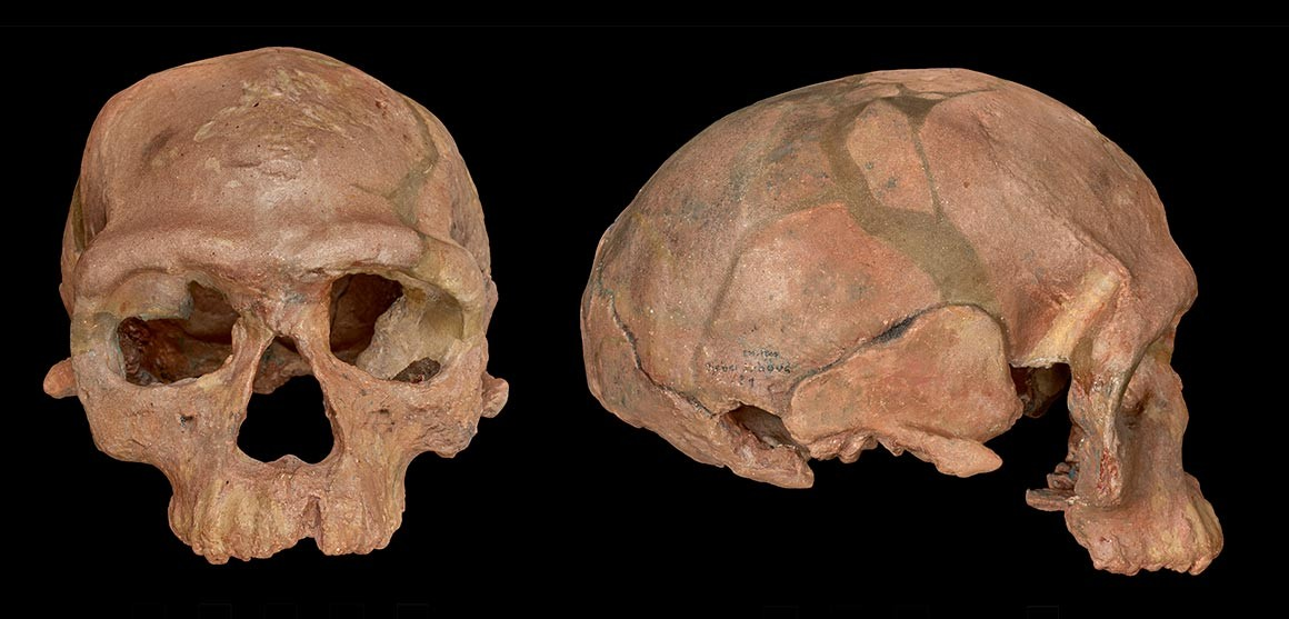 Oldest known Homo sapiens fossils discovered in Morocco