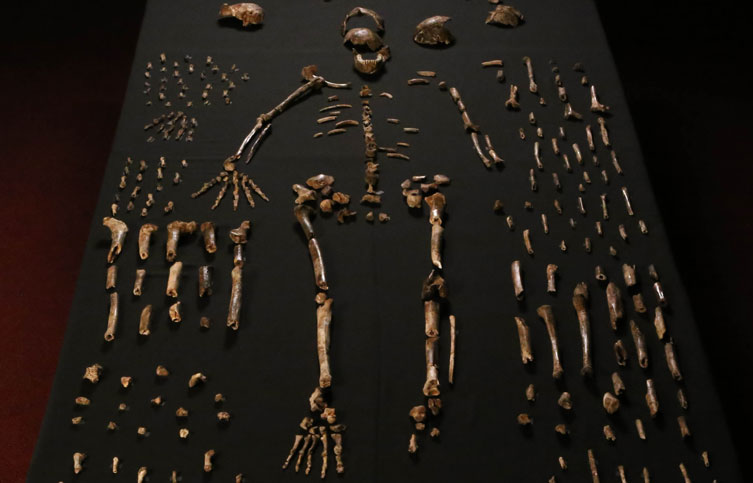Homo naledi fossils laid out