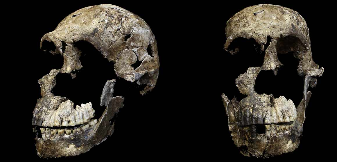Homo naledi skull side and front views