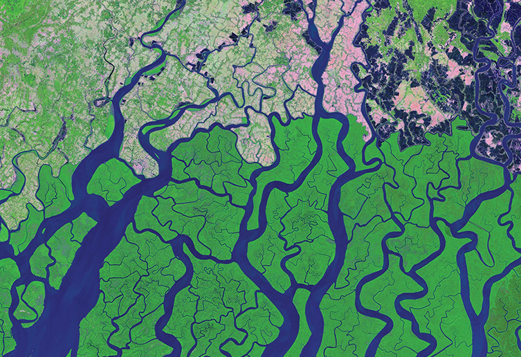 Water channels through a mangrove forest in the Bay of Bengal from above