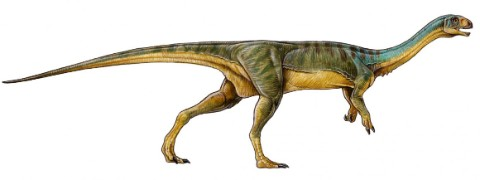 Chilesaurus has a strange mix of skeleton features, some meat-eating and some vegetarian. © Gabriel Lío