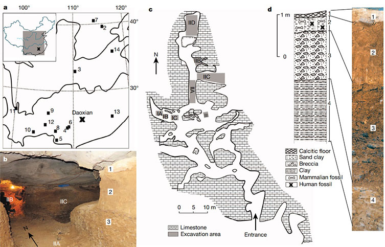 A map of the Daoxian excavation site and rock layers