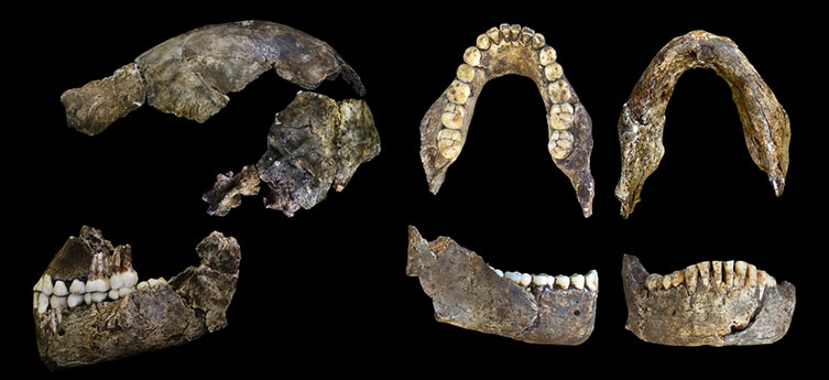 Homo naledi skull and jaw fragments