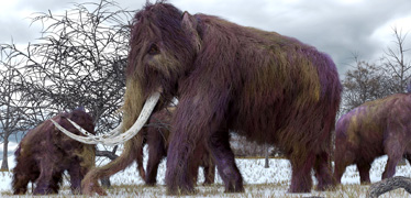 Prehistoric teeth unlock clues to mammoth diets